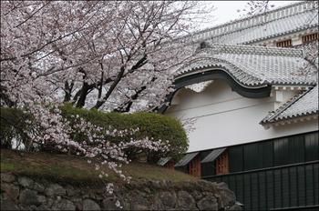 Sakurac7d10704_1