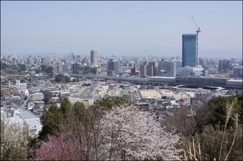 Sakuracmg3691_1