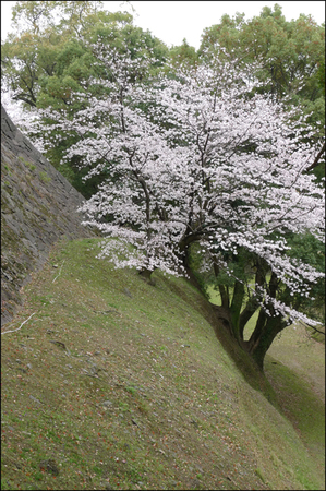 Sakural10233_1